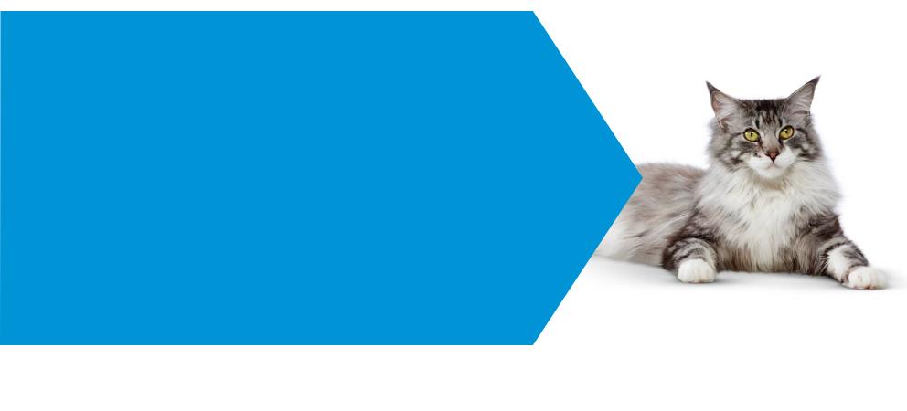 cat hyperthyroidism banner