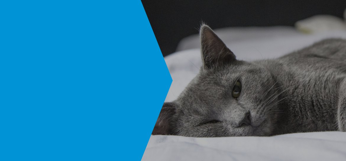 hyperthyroidism in cats managed with long term medication