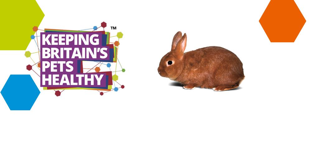 keeping rabbits healthy