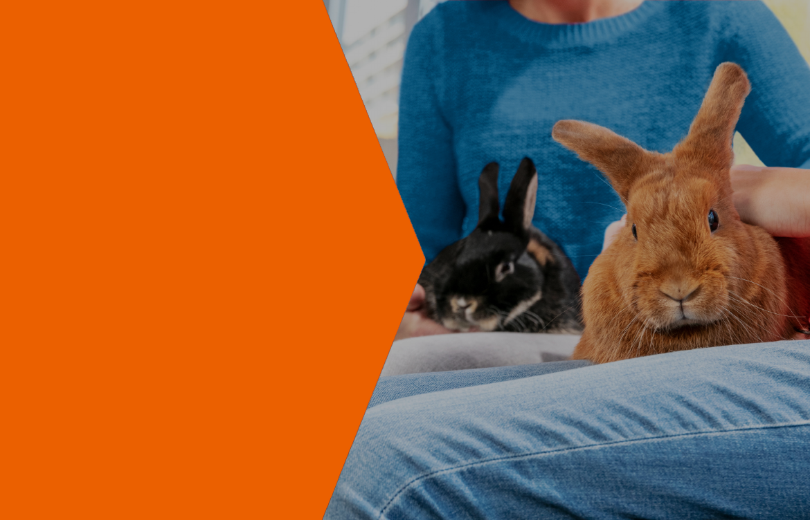 keeping your rabbit healthy