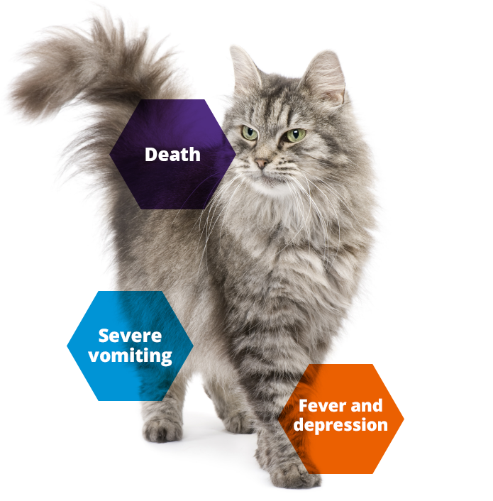 Keeping Britain's Pets Healthy cat disease information