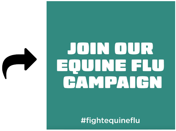 "Image of a tile with text ""join our equine flu campaign"""