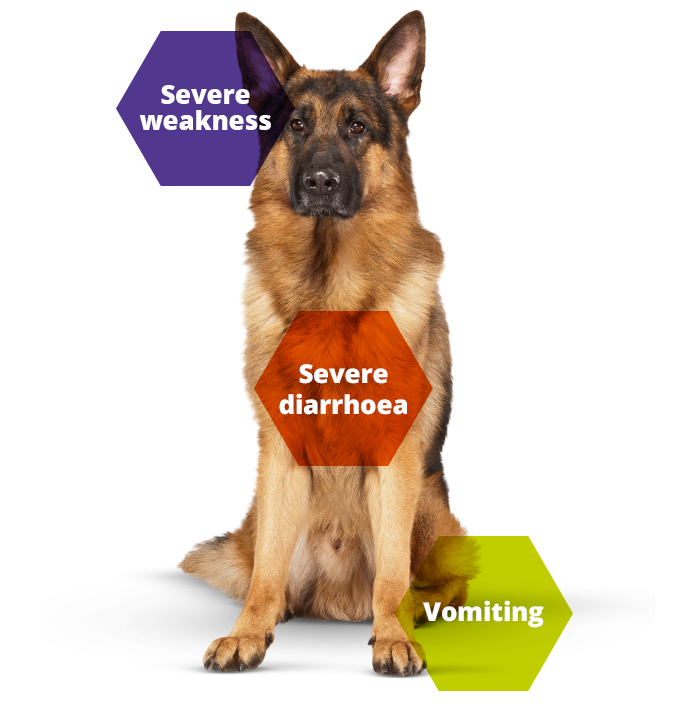 Keeping Britain's Pets Healthy dog parvovirus information