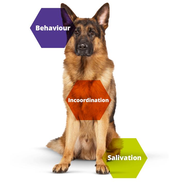 Keeping Britain's Pets Healthy dog disease information
