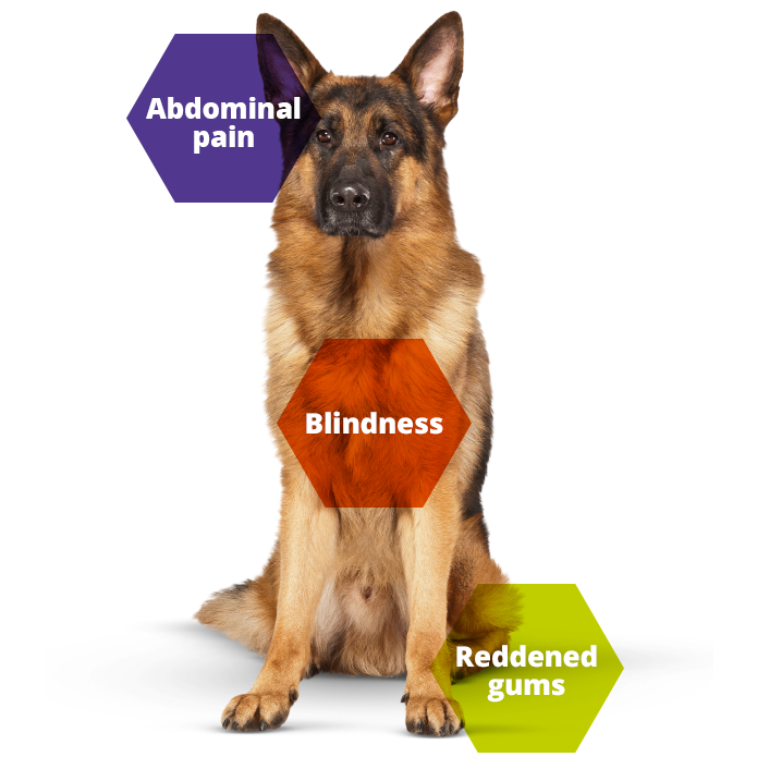 Keeping Britain's Pets Healthy dog blindness information