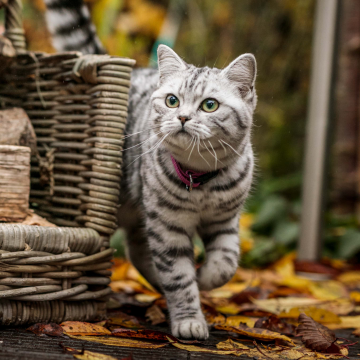symptoms of thyroid problems in cats