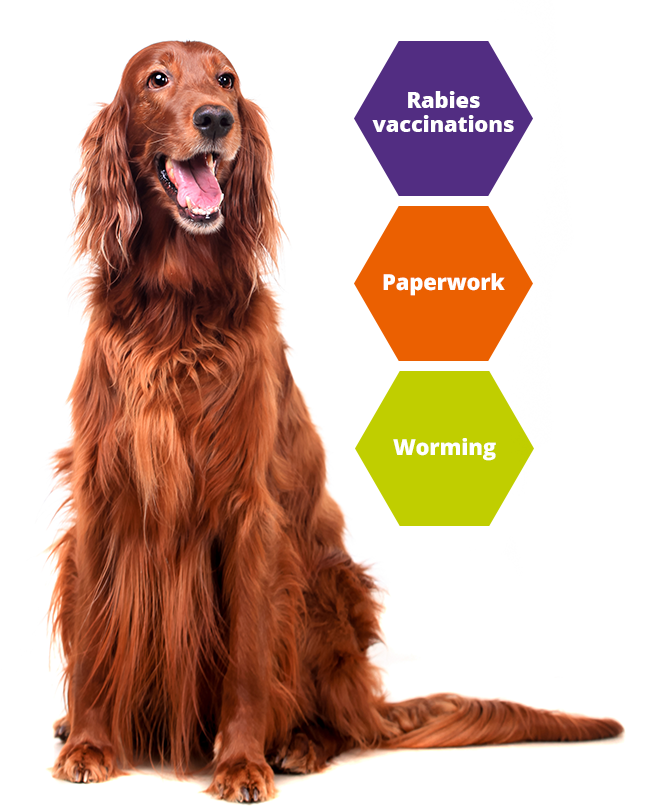 KBPH Imagery pets rabies vaccine travel