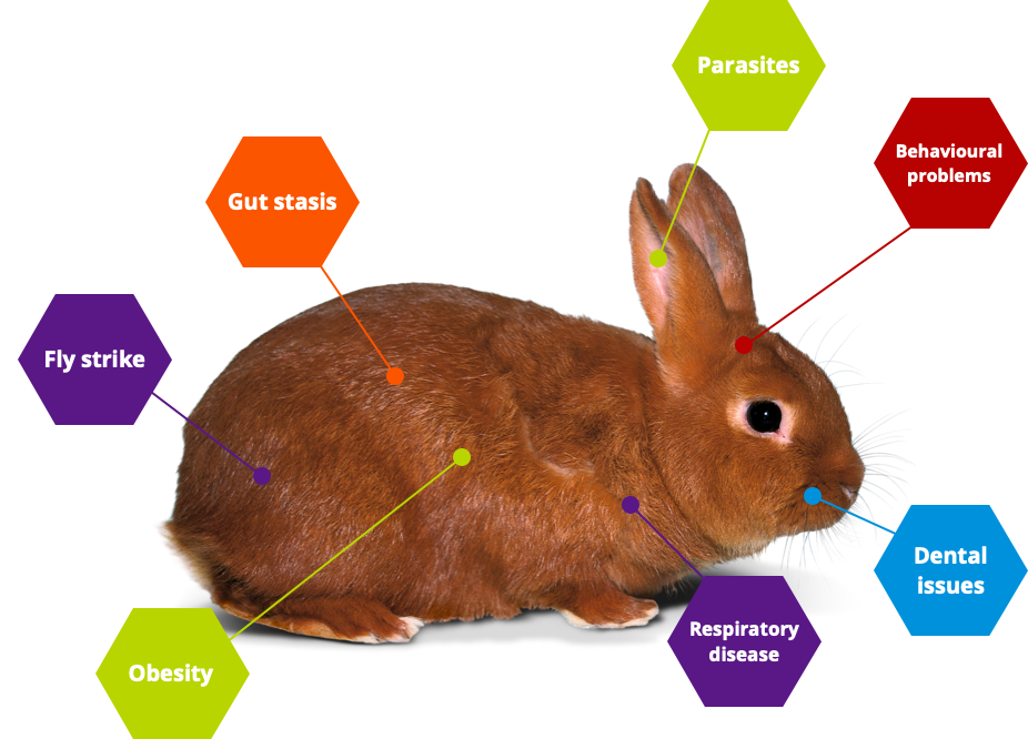 common rabbit health problems