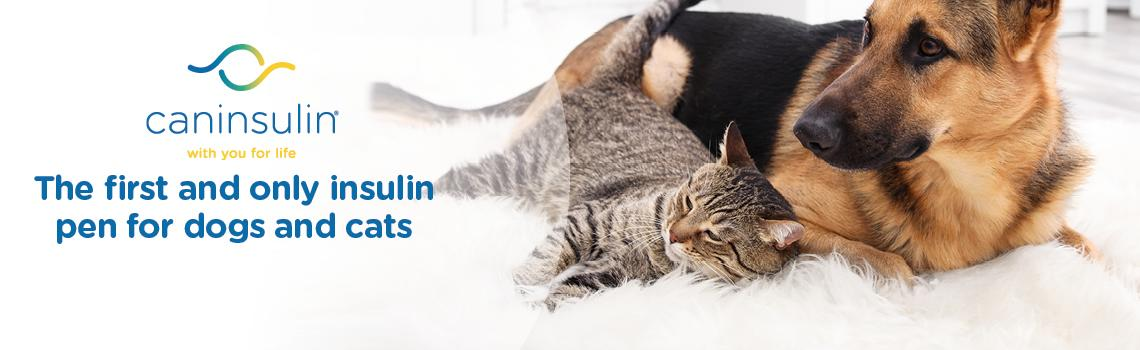 VetPen for use on dogs with diabetes