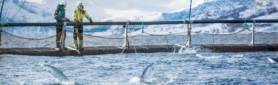 Salmon farming imagery