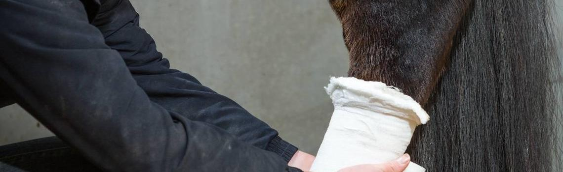 Image of horse with a bandage on its hindlimb.