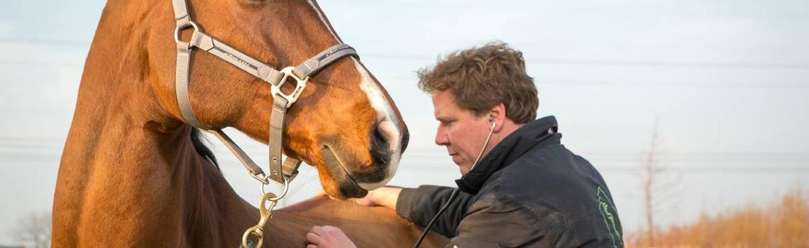 Image of vet examining horse during a vetting