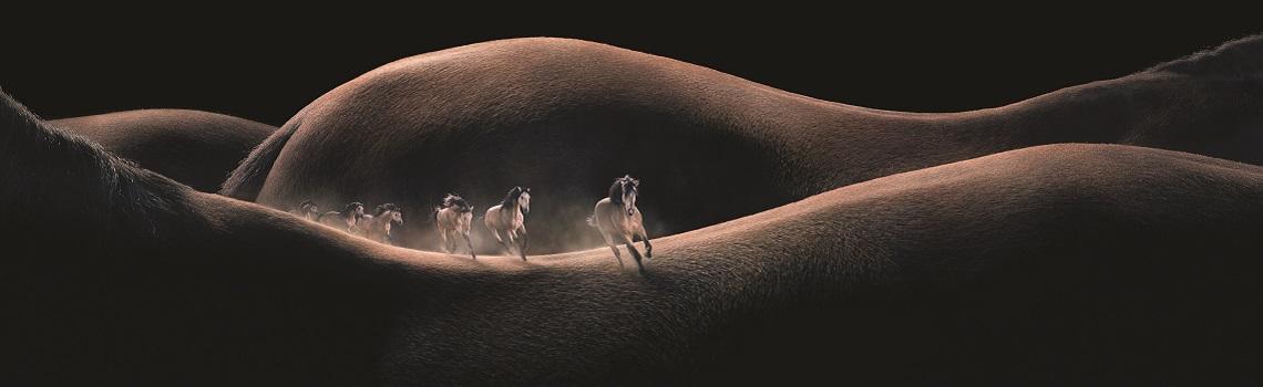 MSD Animal Health horse imagery