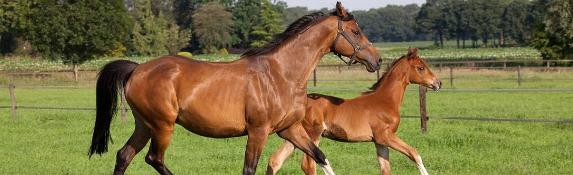 broodmare and foal in field