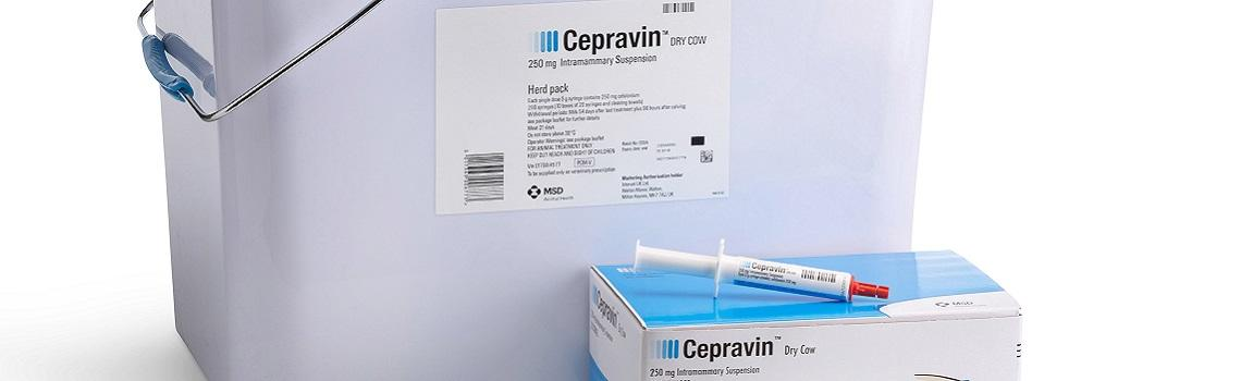Image of Cepravin Dry Cow syringe next to it's cardboard carton