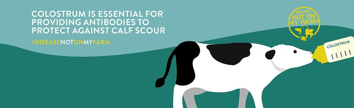 Rolling banner images detailing key messages on calf scour