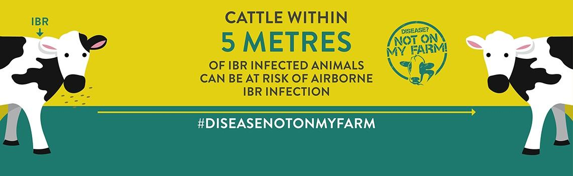 Disease? Not On My Farm! IBR infographic