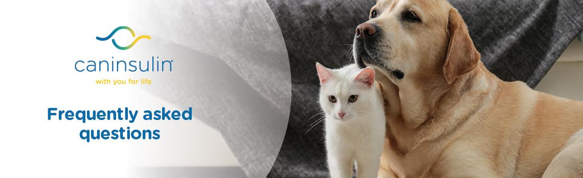 Caninsulin for cats