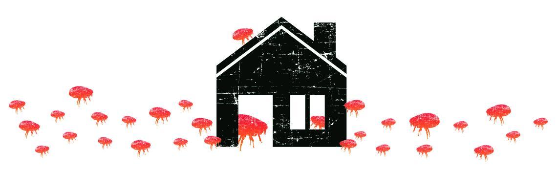 Big Flea Project household imagery