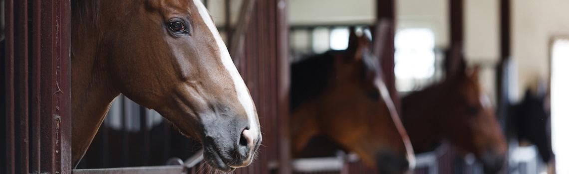 Image showing horses in stable block