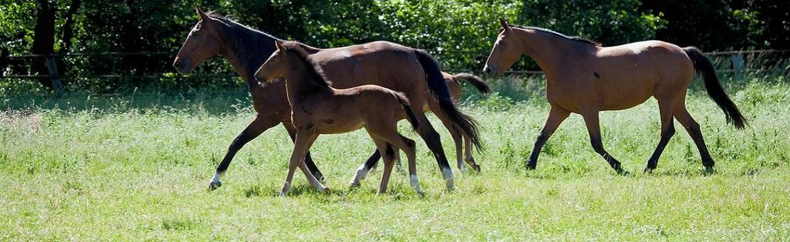 two horse and two foals in a field