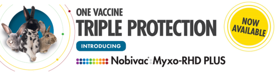 Rabbit vaccination with Nobivac myxo rhd plus