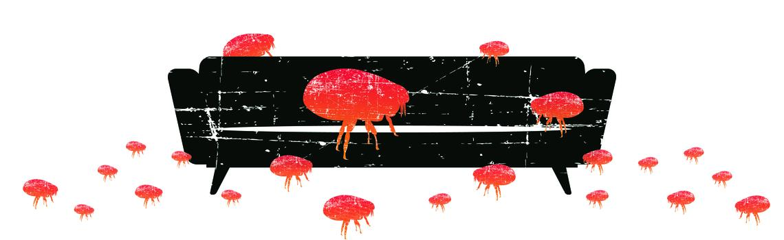 Big Flea Project imagery