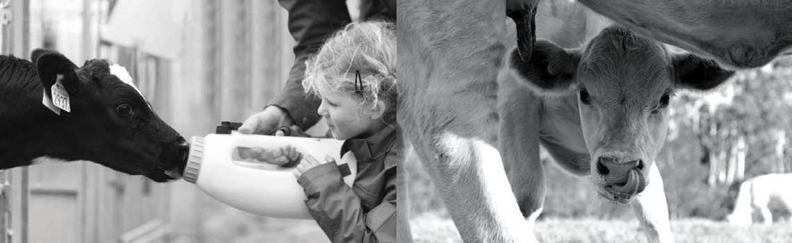 Image of Bovilis Rotavec Corona product branding with cows and a little girl