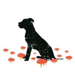 Big Flea Project dog imagery