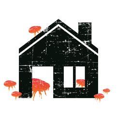 Big Flea Project house imagery