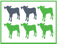 Increased risk of losses in 12-18 month cattle if infected by pneumonia as a young calf4