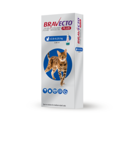 Bravecto Plus spot on for cats pack shot