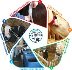 Calf Health Checklist image showing the 5 areas of the checklist