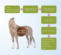 Flow chart showing hindgut disturbance