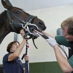 Regular dental care is essential part of horse management.