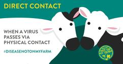 Disease? Not On My Farm! Direct contact infographic