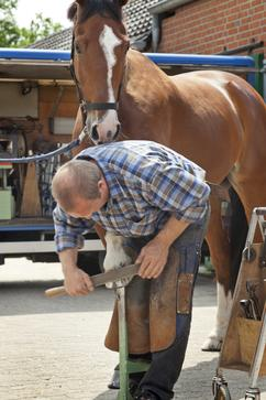 Your horse should be seen by a farrier regularly, either for trimming or shoeing