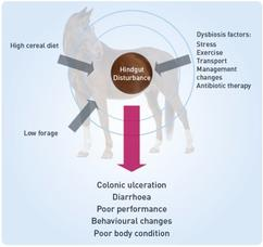 Visual representation of hindgut disturbance