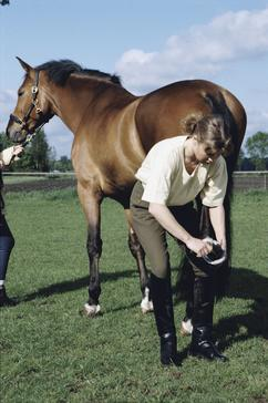 It is very important that horse's feet are picked out and checked regularly.