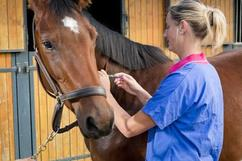 Vaccinate your horse to contribute to herd immunity