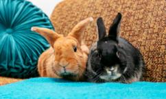 House rabbits need environmental enrichment