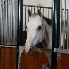 In some situations, for example during winter or due to illness, horses are confined to their stables for long periods of time.