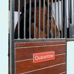 If a horse is suspected to have an infectious disease it must be isolated immediately.