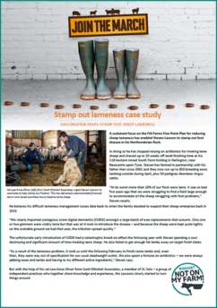 Image of the DNOMF Lawson and XLVets sheep lameness case study