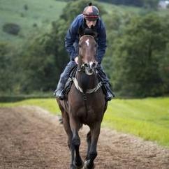 Racehorse on gallops