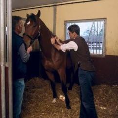 Vet vaccinating horse