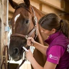 Wormer being administered to horse