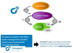 Diagram explaining the action of Porceptal