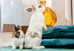 Environmental enrichment is important for rabbits