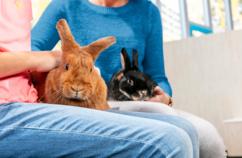 Rabbit transportation requires planning